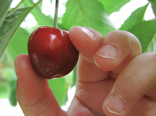 cherry-picking